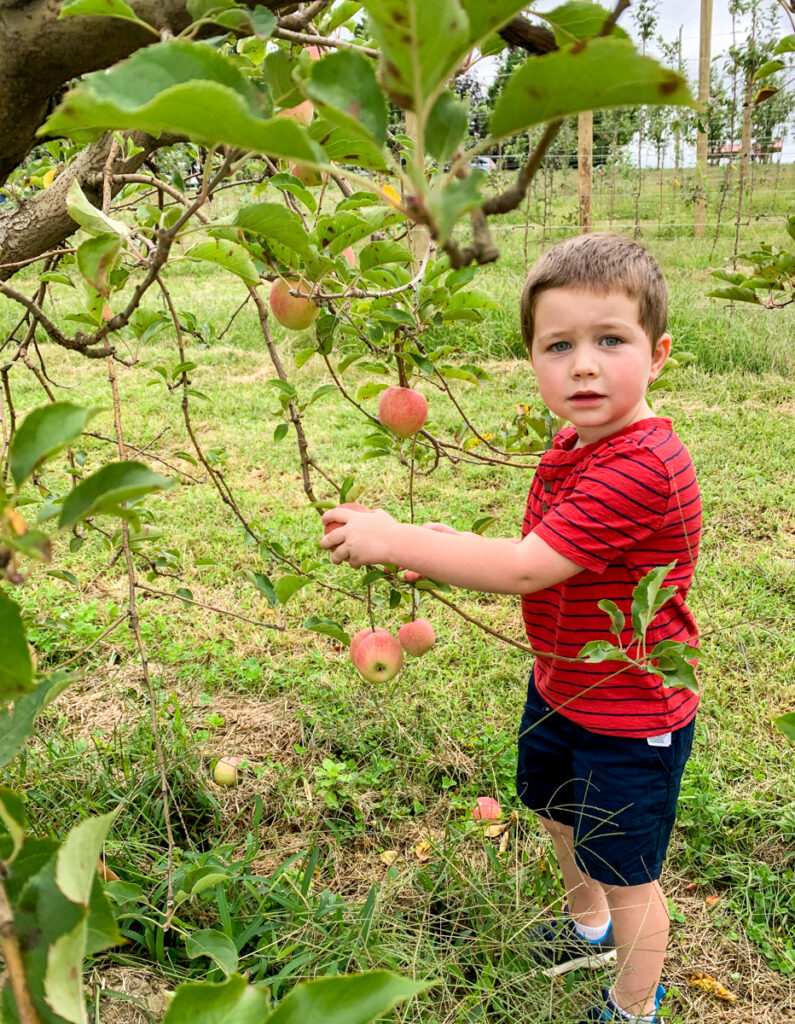apple picking for kids